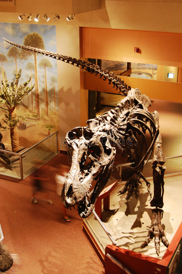 Dinosaur Skeleton in Washington Museum