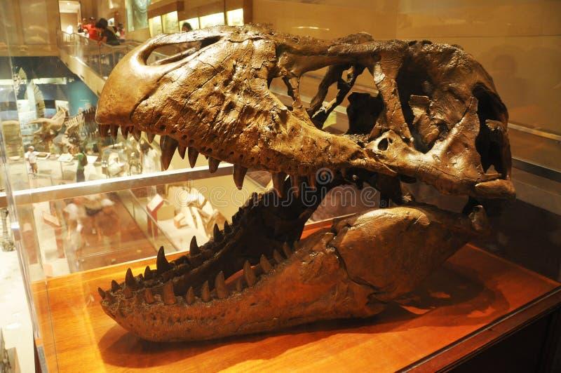 Download Dinosaur Skull In Washington Museum Editorial Stock Image - Image of history, prehistoric: 16460324
