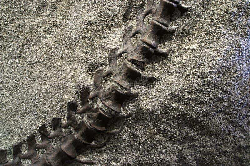 Dinosaur Tail stock image