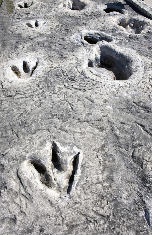 Dinosaur Tracks in Texas. Dinosaur Valley State Park in Glen Rose,Texas showing Dino tracks over 100 million years old royalty free stock image