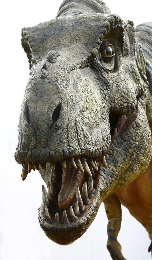 Dinosaur Tyrannosaurus rex on white stock photography