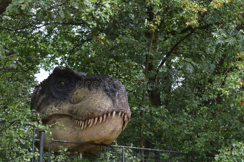 Dinosaur royalty free stock photos