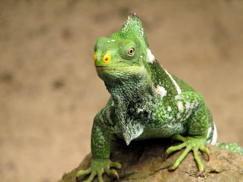 Dinosaur vivant photographie stock libre de droits