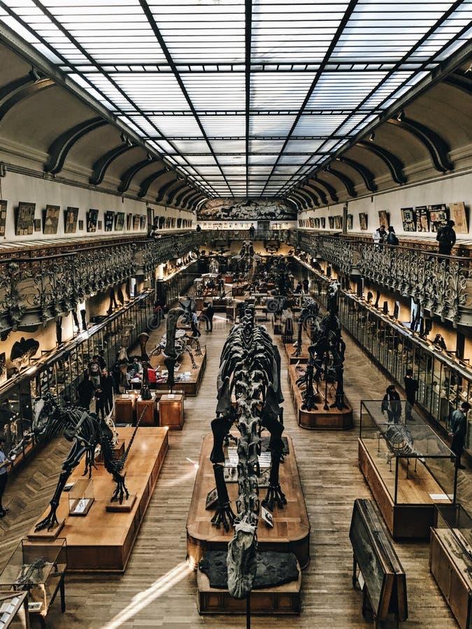 Dinosaura muzeum fotografia stock