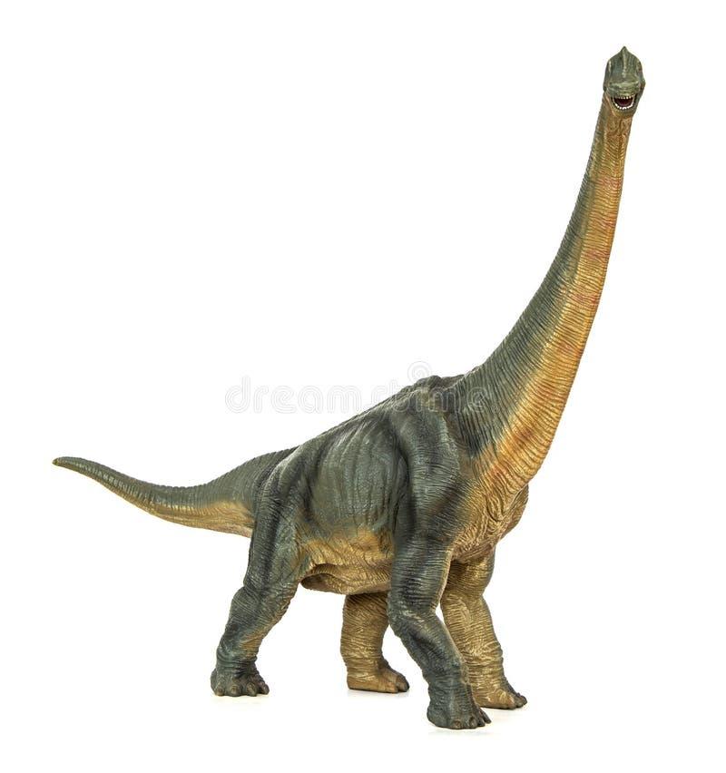 Dinosaura sauropod diermibot trakenu imienia długi necked brachiosaurus zdjęcia stock