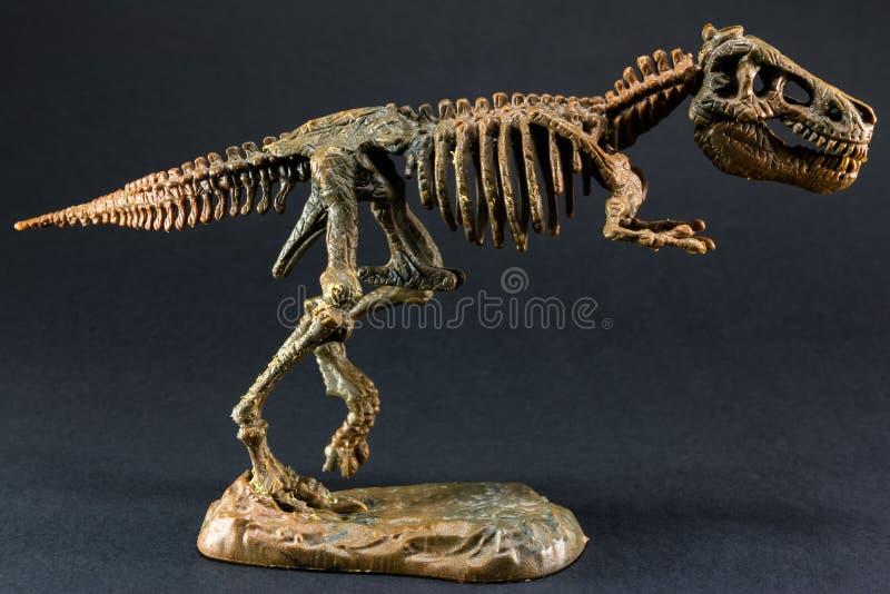 Dinosaura Tyrannosaurus T Rex kościec na czarnym tle zdjęcie royalty free