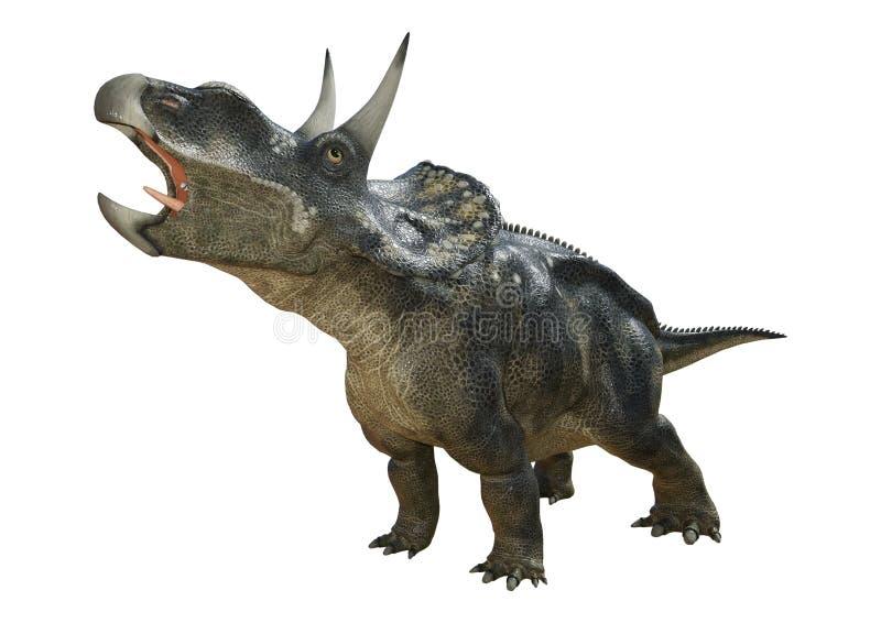 dinosaure Diceratops du rendu 3D sur le blanc illustration stock