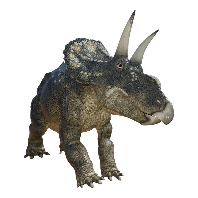 dinosaure Diceratops du rendu 3D sur le blanc illustration libre de droits