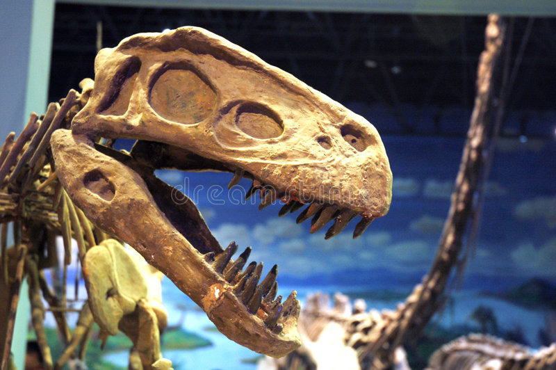dinosaurfossil