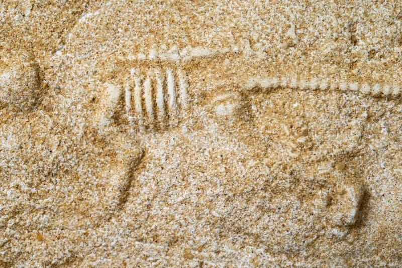 Dinosauriefossil royaltyfria foton