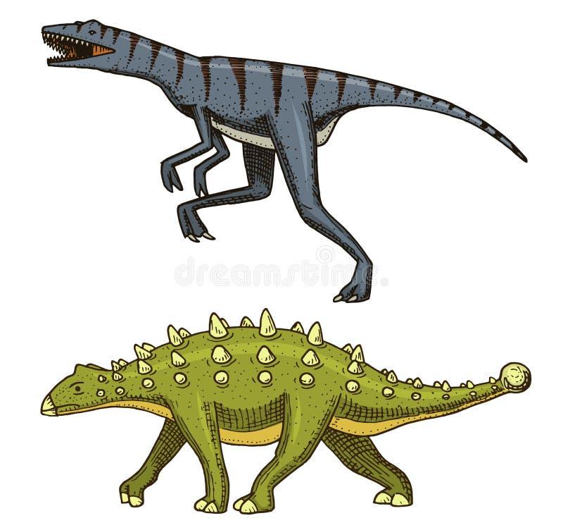 Dinosaurier Ankylosaurus, Talarurus, Velociraptor, Euoplocephalus, Saltasaurus, Skelette, Fossilien Prähistorische Reptilien lizenzfreie abbildung