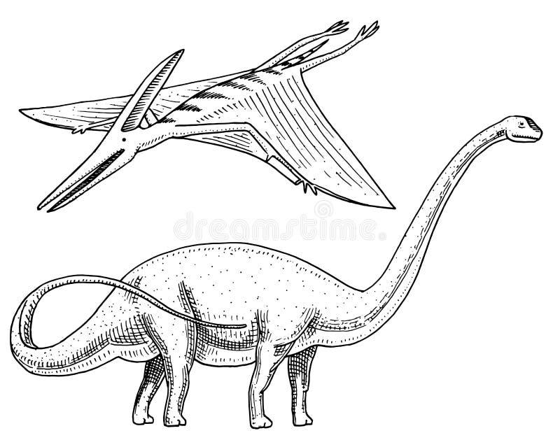 Dinosaurier Brachiosaurus oder Sauropod, Plateosaurus, Diplodocus, Apatosaurus, Pterosaur, Skelette, Fossilien, geflügelte Eidech lizenzfreie abbildung