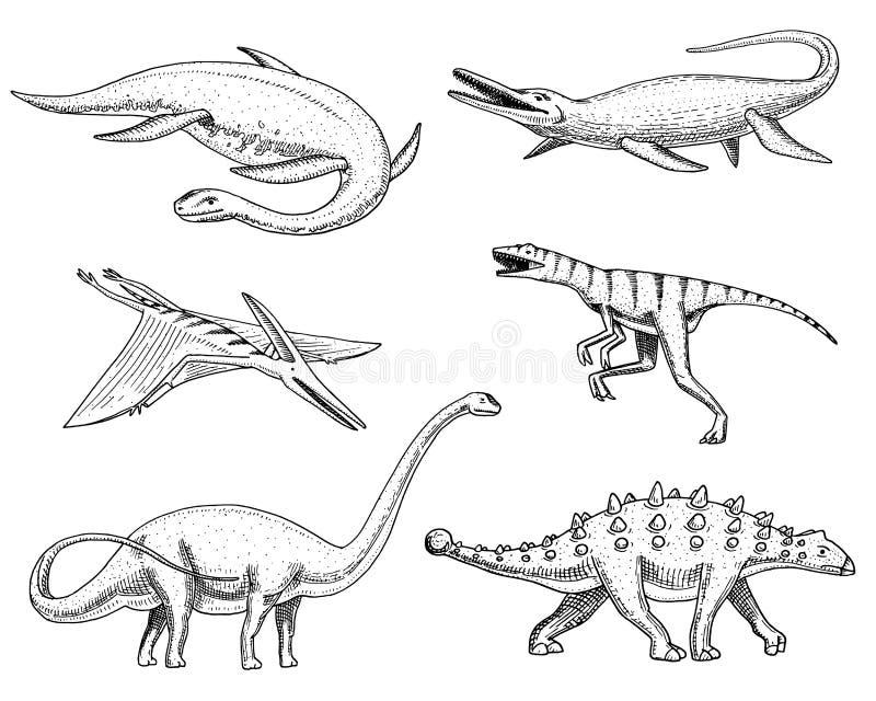 Dinosaurier Elasmosaurus, Mosasaurus, Barosaurus, Diplodocus, Pterosaur, Ankylosaurus, Velociraptor, Fossilien, geflügelt lizenzfreie abbildung