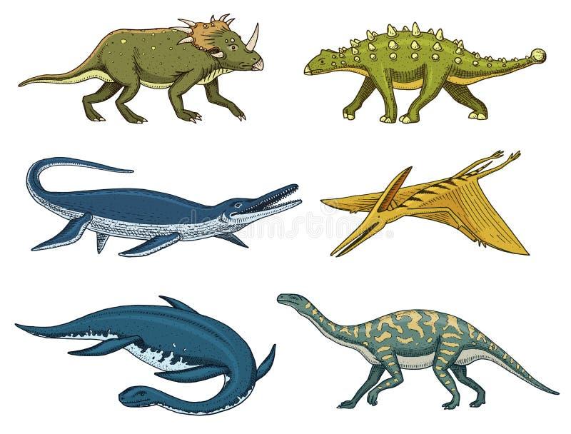 Dinosaurier Elasmosaurus, Mosasaurus, Barosaurus, Diplodocus, Pterosaur, Ankylosaurus, Velociraptor, Fossilien, geflügelt stock abbildung