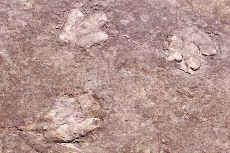 Dinosaurier-Spuren stockfotografie