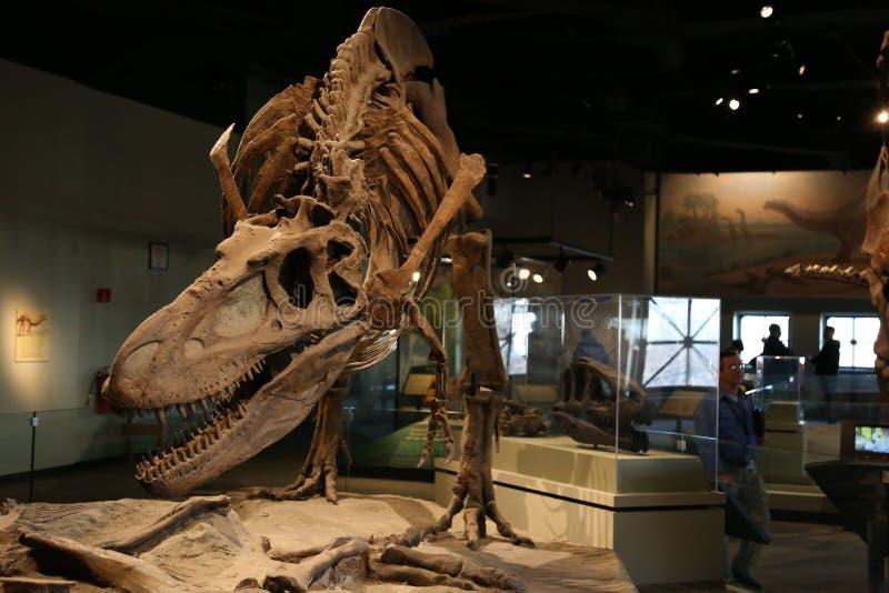 dinosauriere lizenzfreie stockfotografie