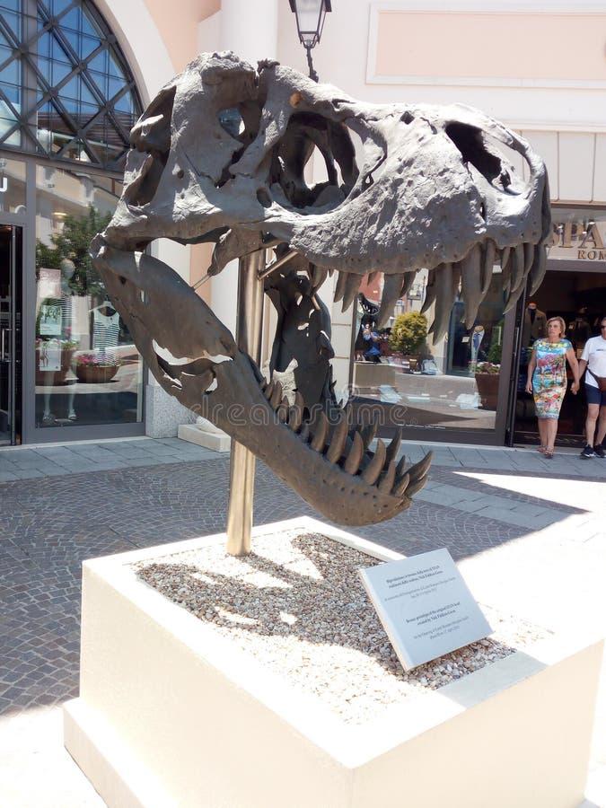 Dinosaurierschädel stockfotos