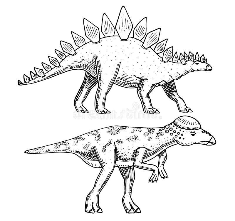 DinosaurieStegosaurus, Pachycephalosaurus, Lexovisaurus, skelett, fossil Förhistoriska reptilar, djur inristade handen vektor illustrationer