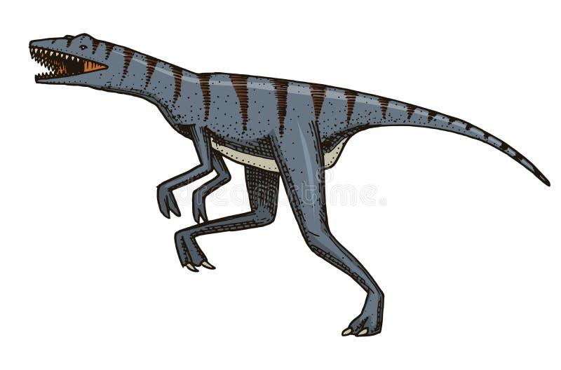 DinosaurieVelociraptor, skelett, fossil Förhistoriska reptilar, djur inristade handen drog vektorn royaltyfri illustrationer