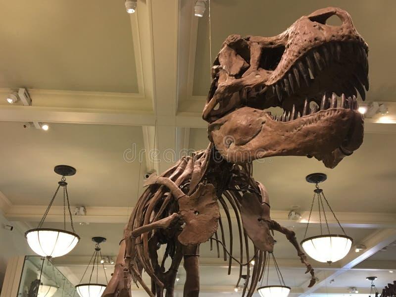 Download Dinosaurio imagen editorial. Imagen de esqueleto, visualización - 100525935