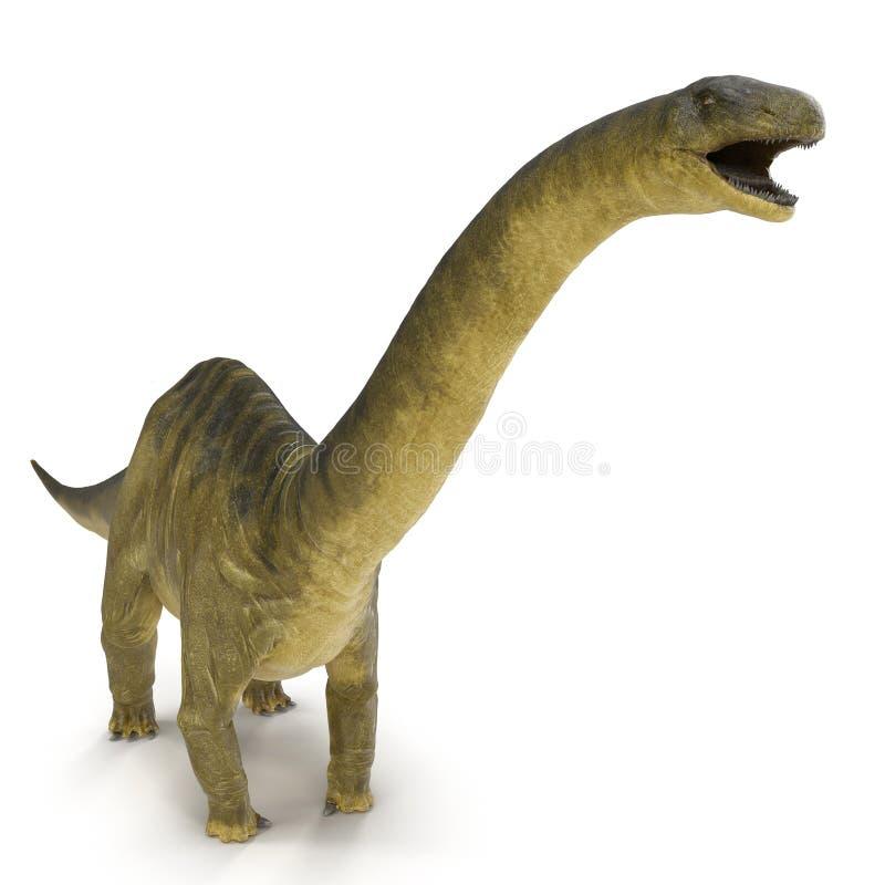 Dinosaurio del Apatosaurus en blanco ilustración 3D ilustración del vector