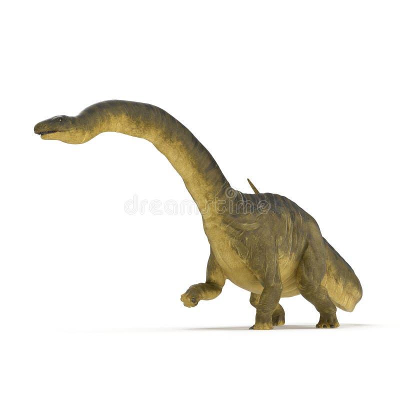 Dinosaurio del Apatosaurus en blanco ilustración 3D stock de ilustración