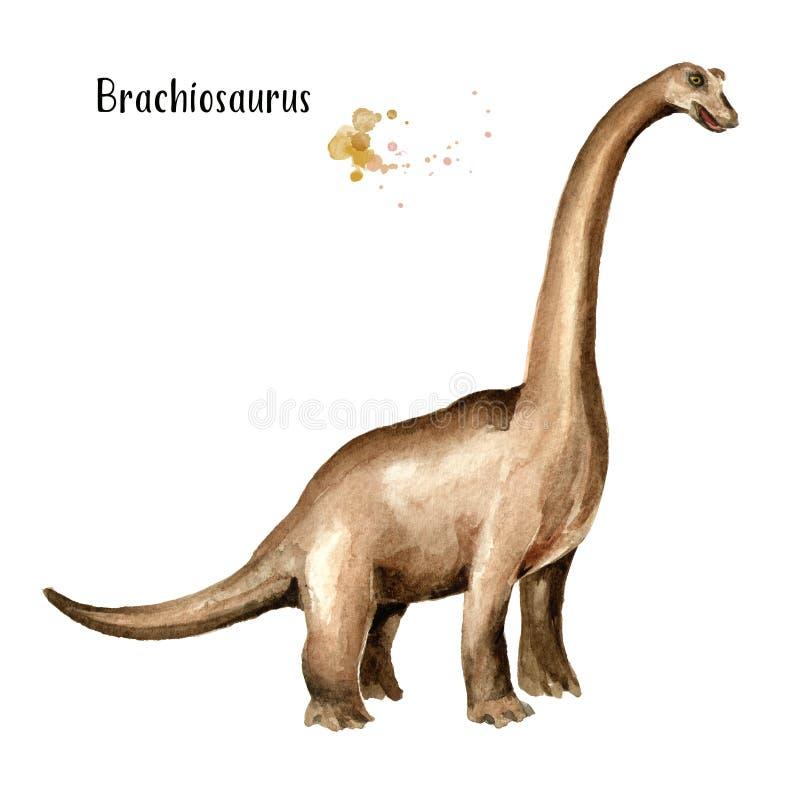 Dinosaurio del Brachiosaurus Ejemplo dibujado mano de la acuarela, aislado en el fondo blanco libre illustration