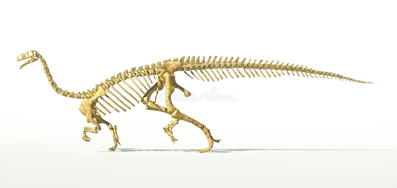 Dinosaurio del Plateosaurus, esqueleto fotorrealista lleno, vista lateral. stock de ilustración