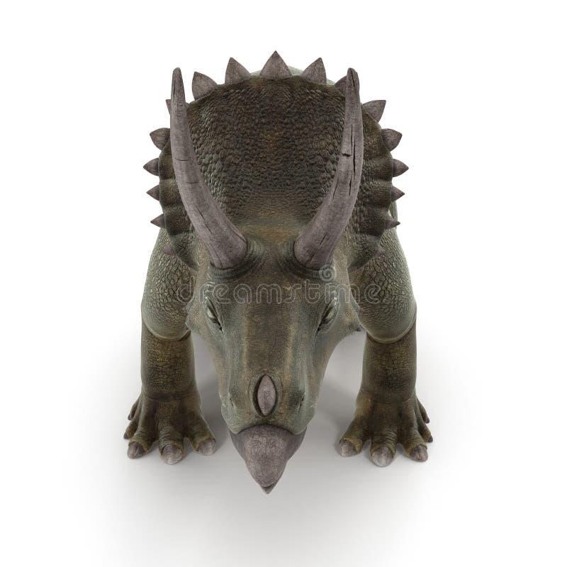 Dinosaurio del Triceratops en blanco Front View ilustración 3D stock de ilustración