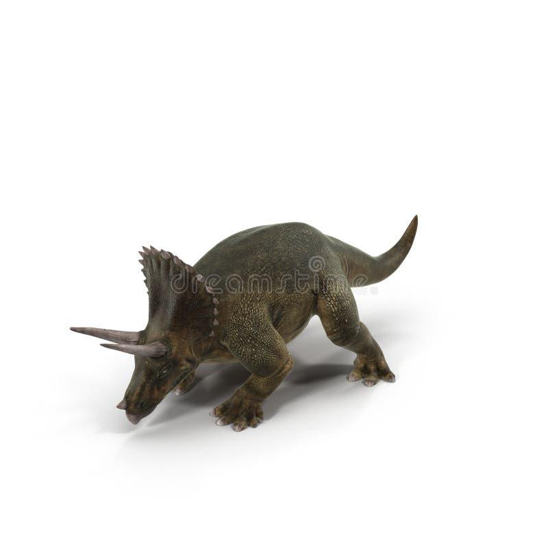 Dinosaurio del Triceratops en fondo brillante ilustración 3D ilustración del vector
