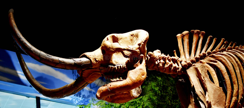 Dinosaurio en el museo de la creación imagen de archivo libre de regalías