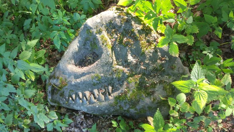 Dinosauro su roccia fotografia stock libera da diritti