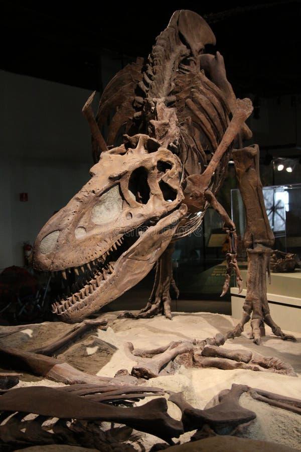 dinosaurskelett arkivbild