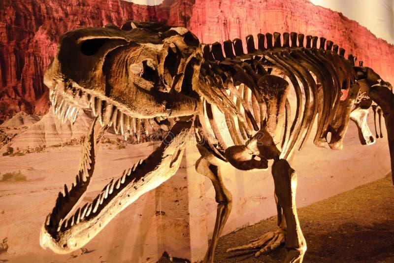 Dinosaurusbeenderen in het natuurreservaat Ischigualasto royalty-vrije stock foto's