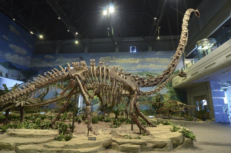 Dinosaurusfossiel stock fotografie