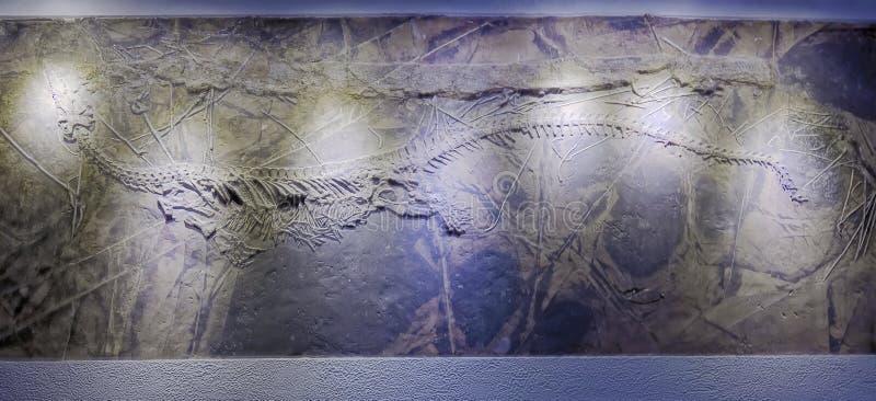Dinosaurusfossiel royalty-vrije stock afbeeldingen