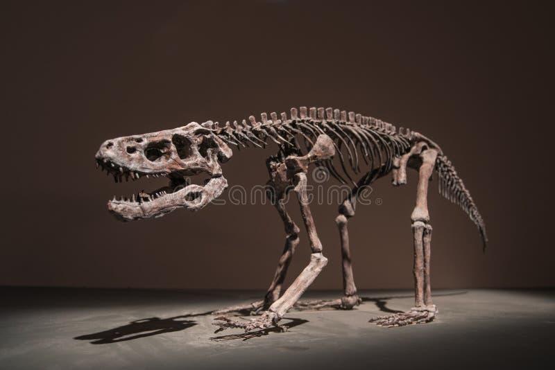 Dinosaurusfossielen royalty-vrije stock foto's