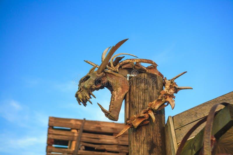 Dinosaurusschedel royalty-vrije stock fotografie