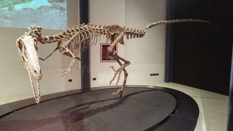 Dinosaurussententoonstelling royalty-vrije stock afbeelding