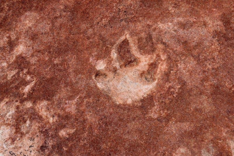 Dinosaurussporen in Coyotebutte het Noorden royalty-vrije stock foto