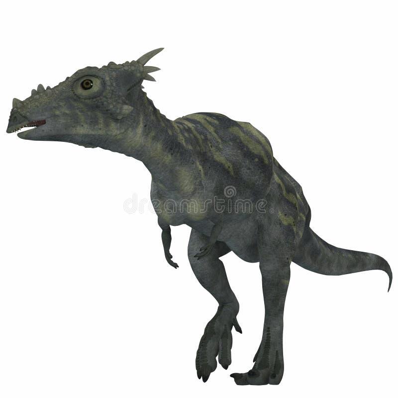 Dinossauro de Dracorex sobre o branco ilustração stock