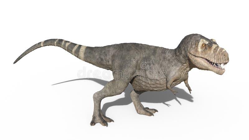 Dinossauro de T-Rex, posição do réptil de Rex do tiranossauro, animal jurássico pré-histórico isolado no fundo branco, rendição 3 ilustração royalty free