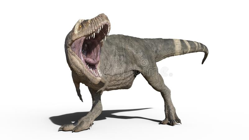 Dinossauro de T-Rex, réptil que anda, animal jurássico pré-histórico de Rex do tiranossauro isolado no fundo branco, rendição 3D ilustração do vetor