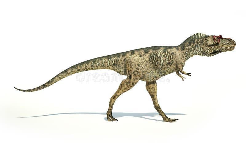 Dinossauro do Albertosaurus, representação photorealistic, vista lateral ilustração do vetor