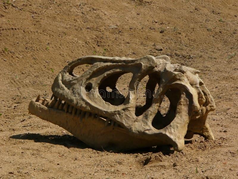 Dinossauro Do Crânio Fotografia de Stock Royalty Free