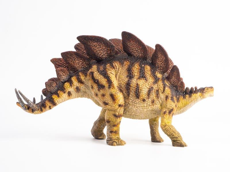 Dinossauro do Stegosaurus no fundo branco fotos de stock royalty free