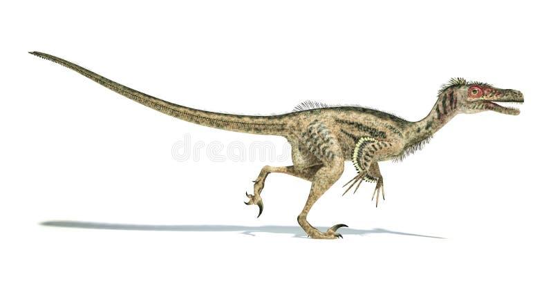 Dinossauro do Velociraptor, scientifically correto, com penas. ilustração stock