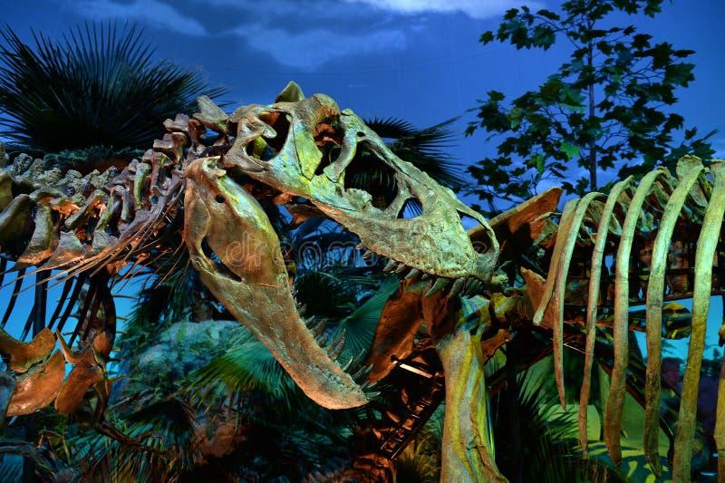 Dinossauro Exibit no museu das crianças de Indianapolis fotografia de stock