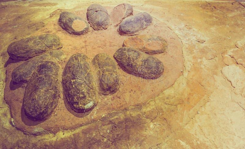 dinossauro fóssil do ovo no fundo da rocha fotografia de stock royalty free