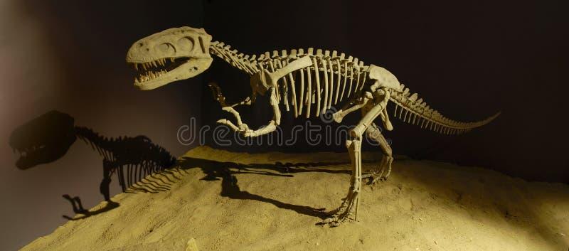 Dinossauro no museu fotos de stock
